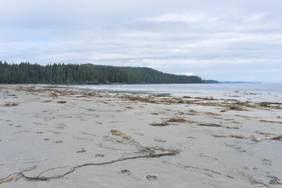 Wolf tracks are a common sight on the North Coast Trail. On most mornings, we woke to a fresh set stamped along the beach. Laura Creek Camp had some large samples, preserved in the sand until the next tide.